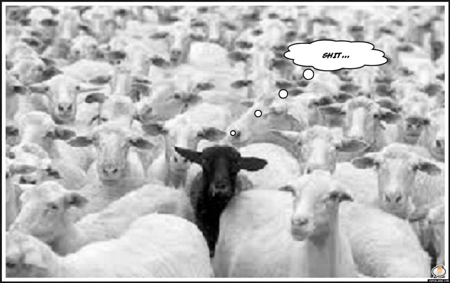Mary had 10,000 lambsHuh?