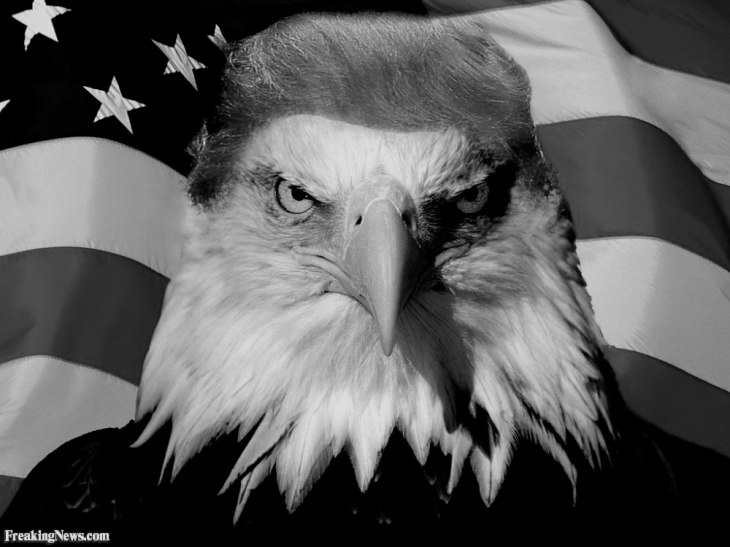 Trump Eagle Hair Freaking News