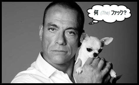 Van Damme what the fuck in Japanese puppy