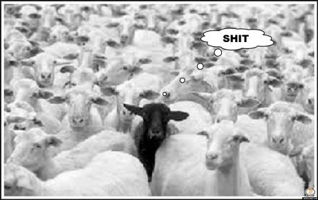 Black sheep shit