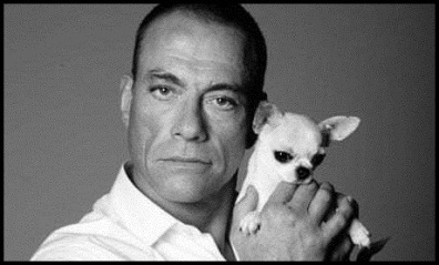 Van Damme and puppy BW